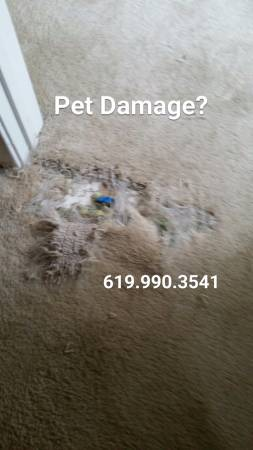 Carpet pet damage repair