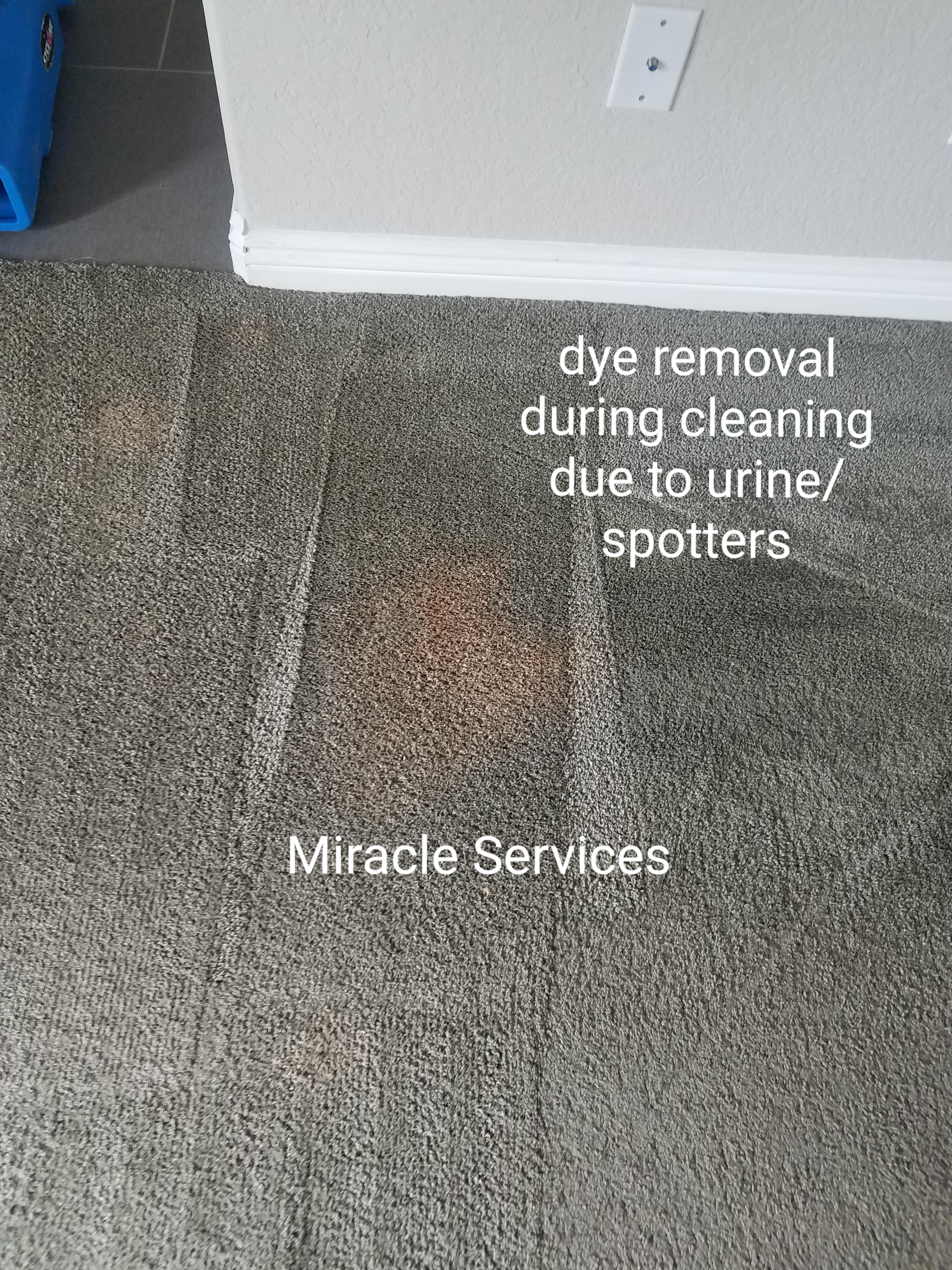 Carpet color loss