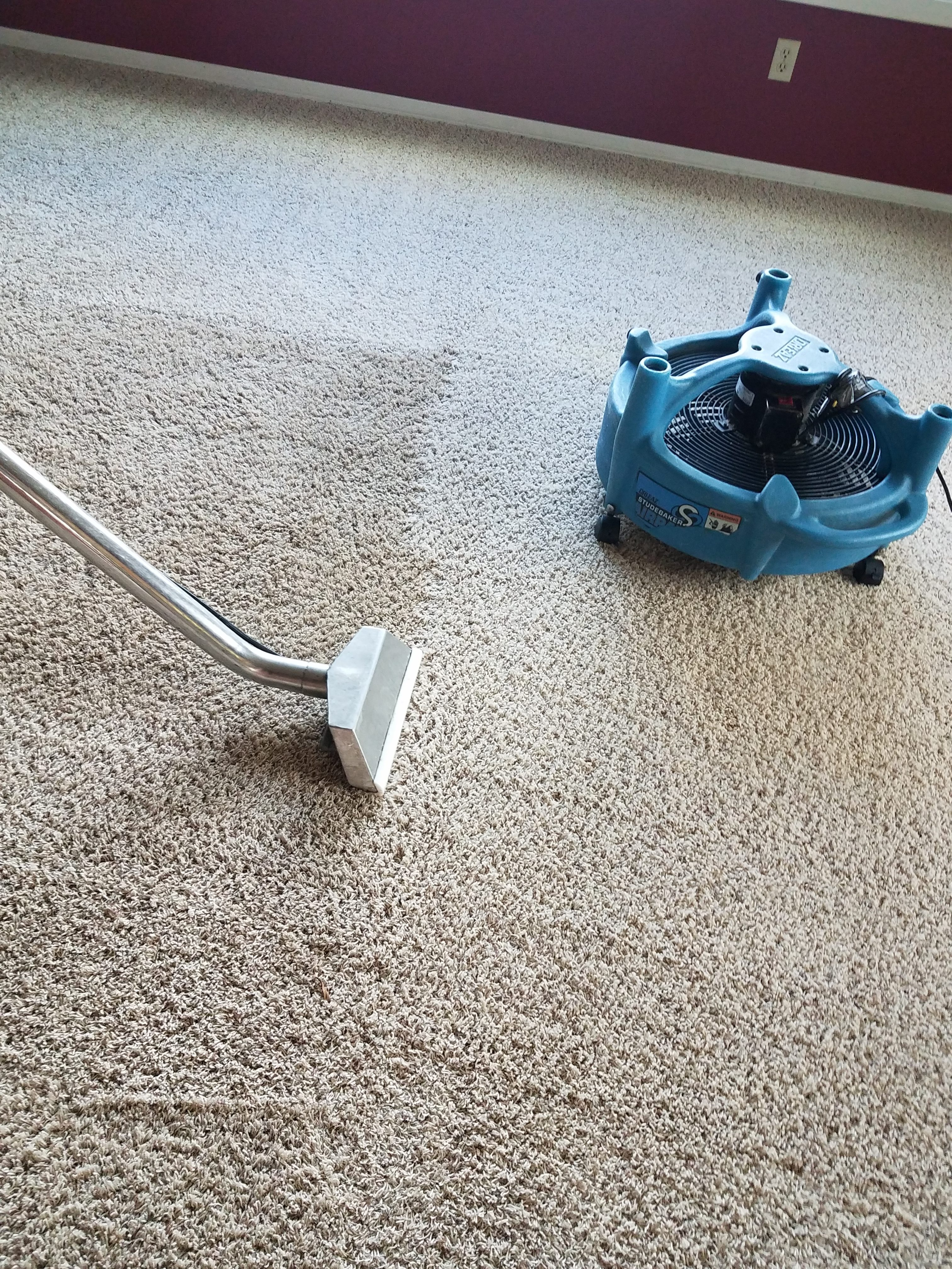 Worst carpet cleaning