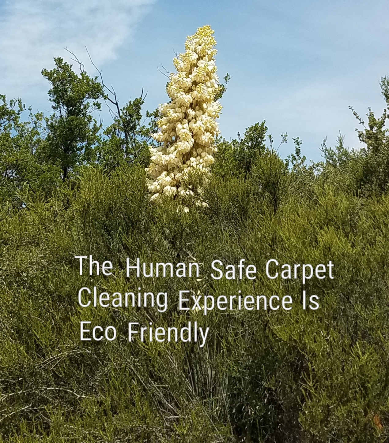 Miracle Services green carpet cleaning