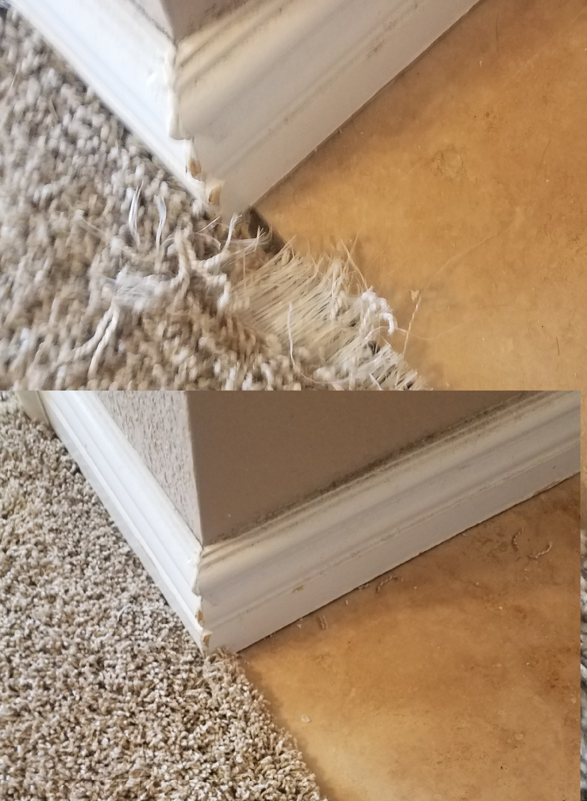 Carpet pet damage patch
