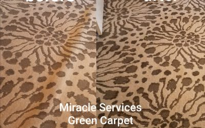 San Diego Carpet Stretching Service | Carpet Repair